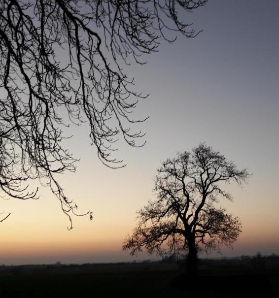 Evening Walk | Jackie Keswick