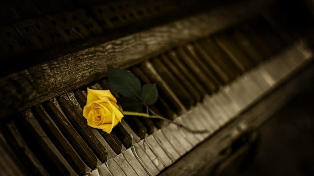 Yellow Roses for Goodbyes   Jackie Keswick
